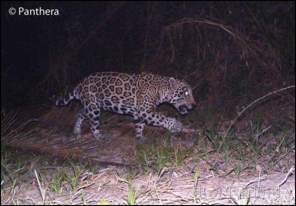 野生动物保护走廊